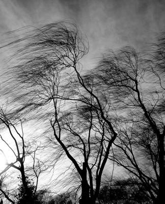 В Петербурге 27 ноября ожидается усиление ветра